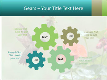 Male ruby-throated PowerPoint Templates - Slide 47