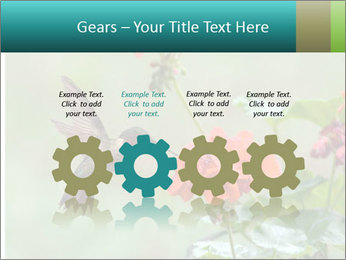 Male ruby-throated PowerPoint Templates - Slide 48