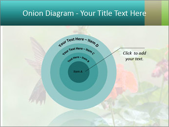 Male ruby-throated PowerPoint Templates - Slide 61