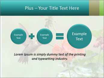 Male ruby-throated PowerPoint Templates - Slide 75