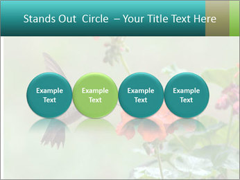 Male ruby-throated PowerPoint Templates - Slide 76