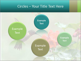 Male ruby-throated PowerPoint Templates - Slide 77