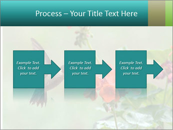 Male ruby-throated PowerPoint Templates - Slide 88