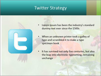 Male ruby-throated PowerPoint Templates - Slide 9