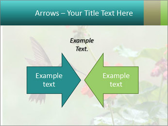Male ruby-throated PowerPoint Templates - Slide 90