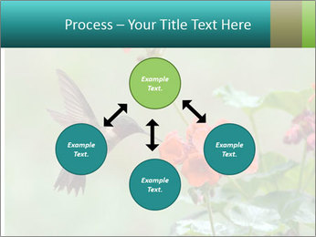 Male ruby-throated PowerPoint Templates - Slide 91
