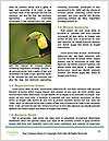 0000087800 Word Template - Page 4
