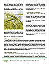 0000087804 Word Template - Page 4