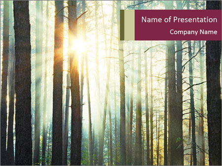 Sunset in the woods PowerPoint Templates