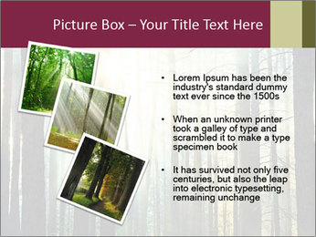 Sunset in the woods PowerPoint Template - Slide 17