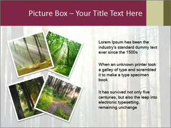 Sunset in the woods PowerPoint Template - Slide 23