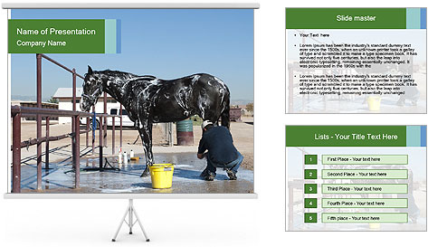 Horse getting a bath PowerPoint Template