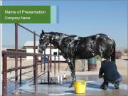 Horse getting a bath PowerPoint Templates