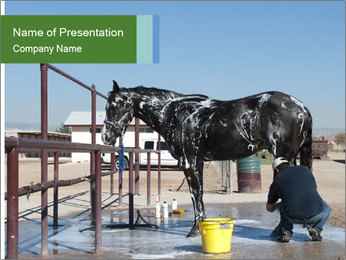 Horse getting a bath PowerPoint Template - Slide 1