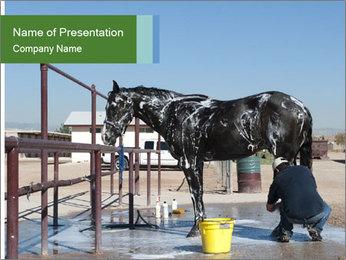 Horse getting a bath PowerPoint Templates - Slide 1