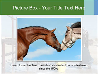 Horse getting a bath PowerPoint Template - Slide 15
