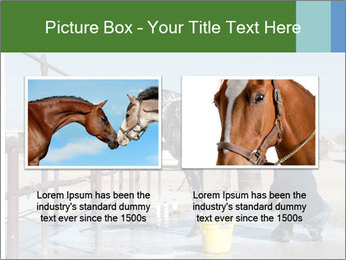 Horse getting a bath PowerPoint Template - Slide 18
