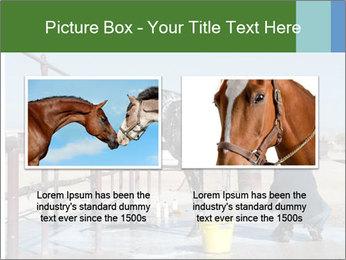 Horse getting a bath PowerPoint Templates - Slide 18