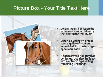 Horse getting a bath PowerPoint Template - Slide 20