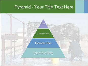 Horse getting a bath PowerPoint Templates - Slide 30