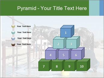 Horse getting a bath PowerPoint Templates - Slide 31