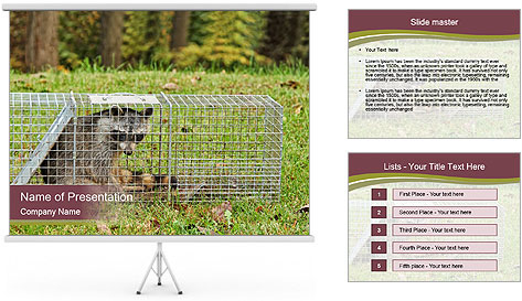 Raccoon PowerPoint Template