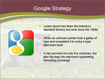 Raccoon PowerPoint Templates - Slide 10