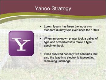 Raccoon PowerPoint Templates - Slide 11
