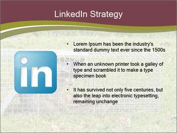 Raccoon PowerPoint Templates - Slide 12