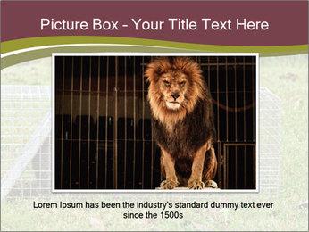 Raccoon PowerPoint Templates - Slide 15