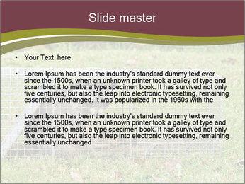 Raccoon PowerPoint Templates - Slide 2