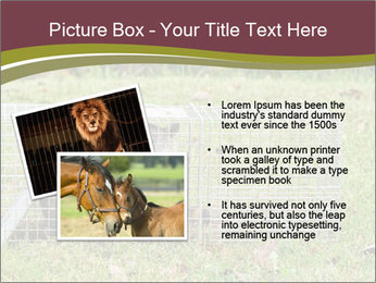 Raccoon PowerPoint Templates - Slide 20