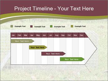 Raccoon PowerPoint Templates - Slide 25