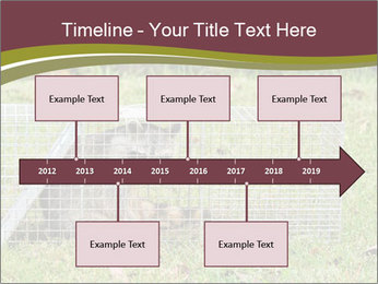 Raccoon PowerPoint Templates - Slide 28