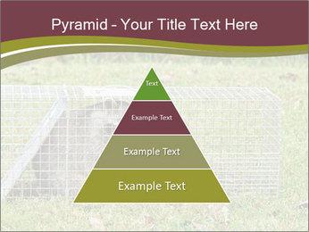 Raccoon PowerPoint Templates - Slide 30