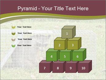 Raccoon PowerPoint Templates - Slide 31