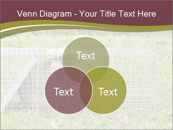 Raccoon PowerPoint Templates - Slide 33