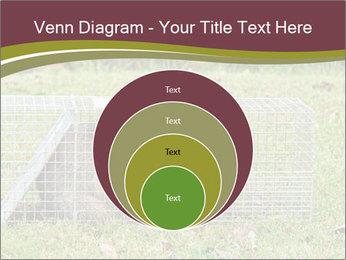 Raccoon PowerPoint Templates - Slide 34