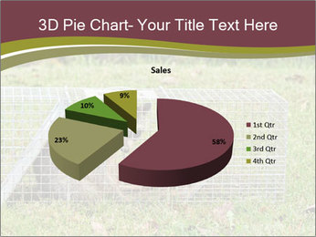 Raccoon PowerPoint Templates - Slide 35