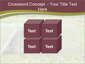 Raccoon PowerPoint Templates - Slide 39