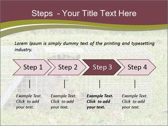 Raccoon PowerPoint Templates - Slide 4