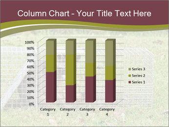 Raccoon PowerPoint Templates - Slide 50