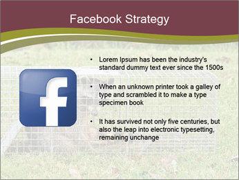 Raccoon PowerPoint Templates - Slide 6