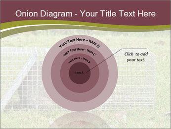 Raccoon PowerPoint Templates - Slide 61