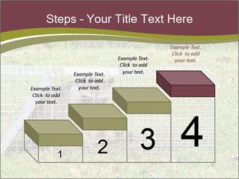Raccoon PowerPoint Templates - Slide 64