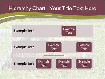 Raccoon PowerPoint Templates - Slide 67