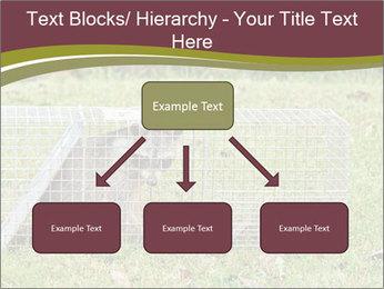 Raccoon PowerPoint Templates - Slide 69