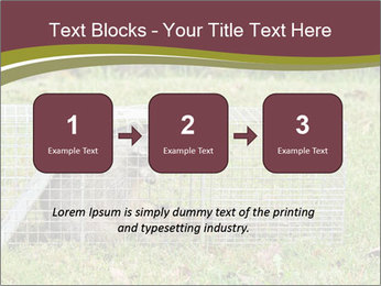 Raccoon PowerPoint Templates - Slide 71