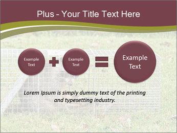 Raccoon PowerPoint Templates - Slide 75