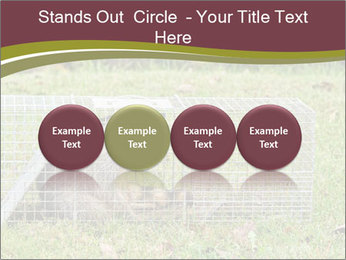 Raccoon PowerPoint Templates - Slide 76
